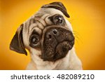 close up of pug emotion on... | Shutterstock . vector #482089210