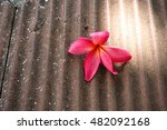 Pink Plumeria Flower On The...