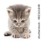 small gray kitten isolated on... | Shutterstock . vector #482161648