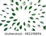 green leaves frame on white... | Shutterstock . vector #482198896
