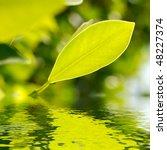 Fresh Leaf Over Water