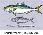 Yellowtail Fish  Japanese...