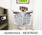 jack russell terrier  sitting... | Shutterstock . vector #482478220