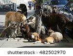 Stock photo dog sitter in new york 482502970