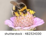 the bumblebee is choosing the