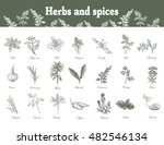 set of herbs and spices in... | Shutterstock .eps vector #482546134