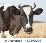 cow farm. close up of cows head ... | Shutterstock . vector #482593009