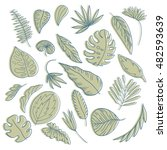 set of hand drawn tropical... | Shutterstock .eps vector #482593639