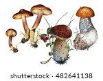 mushrooms watercolor | Shutterstock . vector #482641138