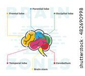 brain zones scheme. colorful... | Shutterstock .eps vector #482690998