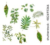 watercolor painting of leaves... | Shutterstock . vector #482695366