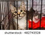 Stock photo little kittens in a cage of a shelter for homeless animals 482743528