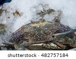 Fresh Live Crab On Ice In A Pile