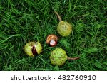 Conkers  Horse Chestnuts  On...