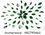 green leaves pattern on white... | Shutterstock . vector #482790463