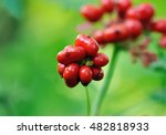 a close up of the most famous...   Shutterstock . vector #482818933