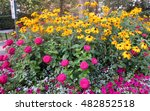 Yellow Daisies And Pink Dahlias