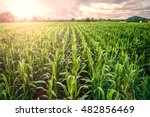 cornfield  lens flare effect