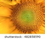 sunflower natural background.... | Shutterstock . vector #482858590