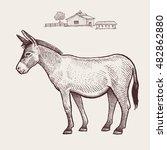 donkey. vector. | Shutterstock .eps vector #482862880