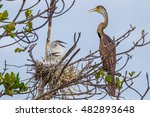 oriental darter anhinga... | Shutterstock . vector #482893648