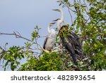 young oriental darter anhinga... | Shutterstock . vector #482893654