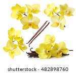 Yellow Orchid Flowers And...