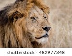 king male lion portrait in... | Shutterstock . vector #482977348