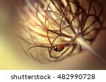 ladybug on beautiful fluffy... | Shutterstock . vector #482990728