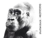 halfrone portrait of gorilla...