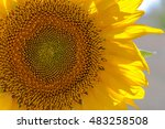 Постер, плакат: sunflower sunflower photo sun