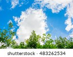 Beautiful Trees On Blue Sky An...