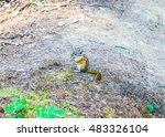 Small photo of High dynamic range (HDR) Squirrel scientific name Animalia Chordata Mammalia Rodentia Sciuromorpha Sciuridae