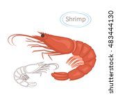 royal red shrimp set with... | Shutterstock .eps vector #483444130