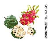 sugar apple  custard apple ... | Shutterstock .eps vector #483465634
