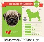 pug dog breed vector info...   Shutterstock .eps vector #483541144