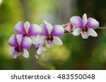 Purple And White Orchid On...
