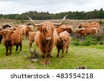 Small photo of Aberdeen angus cattle