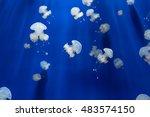 Medusa Jellyfish Underwater...