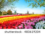 landscape with tulips ... | Shutterstock . vector #483619204