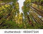 hiking through the coastal... | Shutterstock . vector #483647164