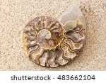 Spiral Ammonite Fossil On Sand...