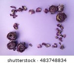 Dry Roses Framework On Purple...