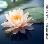 lotus flower in pond vintage... | Shutterstock . vector #483766480