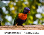 portrait of colorful parrot.... | Shutterstock . vector #483823663