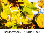 abstract foliage background ... | Shutterstock . vector #483853150
