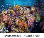 colorful underwater garden on... | Shutterstock . vector #483867700
