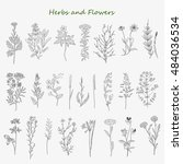 hand drawn herbs and flowers... | Shutterstock . vector #484036534