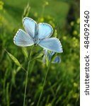 Beautiful Blue Butterfly On Th...