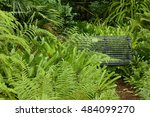 Bench Hidden Away In Foliage